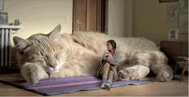 11 Things You'll Only Relate to If You Have an Incredibly Caring Cat!