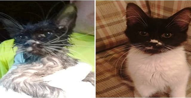 Stray Kitten Rescued, Gets Named 'Puddles'