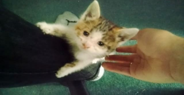 Kitten Asks Kind Biker Who Rescued Her to be Her Forever Human! – VIDEO!
