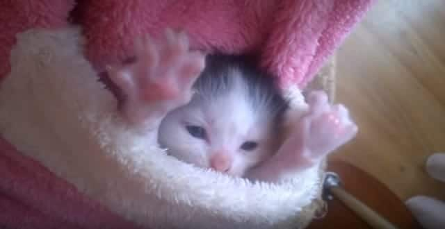 This Is Just One Extremely Cute Kitten Video!