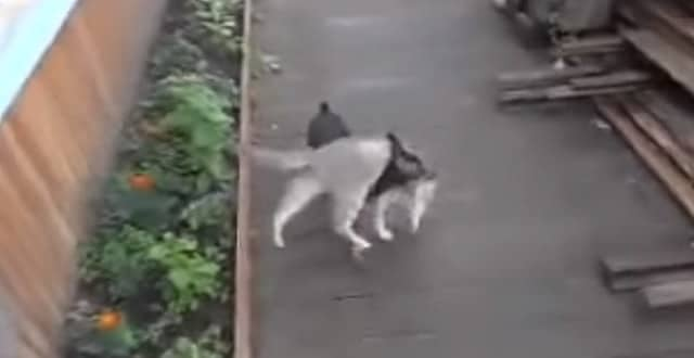 VIDEO: She Taught Her Dog To Fetch The Cat!