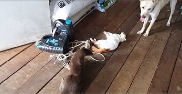 VIDEO: True Friendship: Cat, Dog and Otter Share Incredible Love for Each Other!