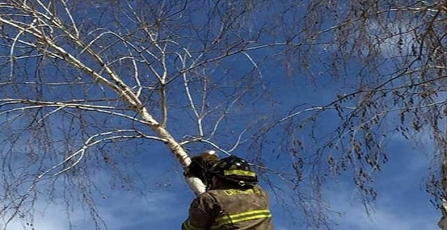 How Much Does It Actually Cost a Fire Department to Rescue a Cat?