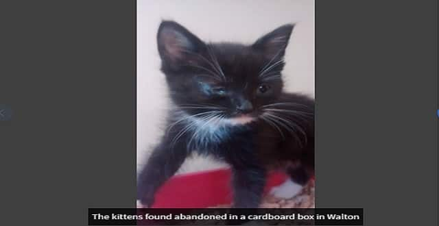 Terrified Six-week-old Kittens with Flu Dumped in a Cardboard Box and Abandoned!