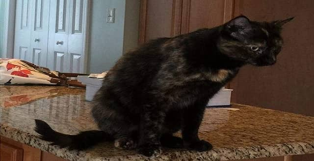 Two Years and 700 Miles Later, Cat Found in New York Reunited with Owners in North Carolina!