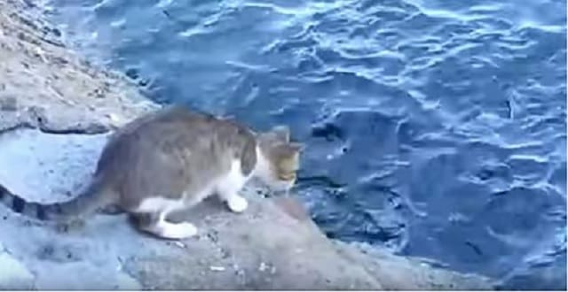 The Envy of Any Fisherman! – VIDEO!