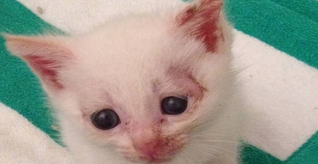 Kitten Dropped Off To Be Euthanized Received A Loving Home!