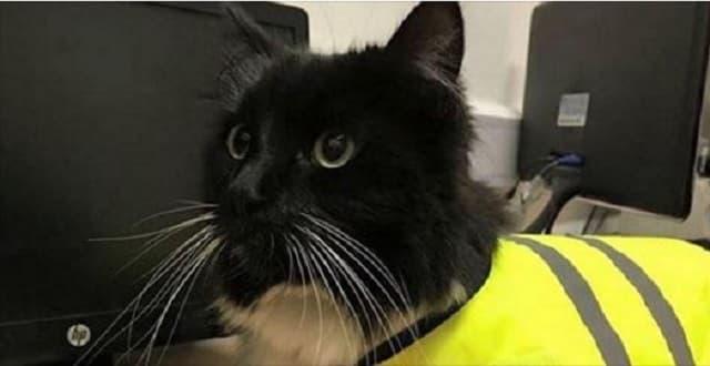 "Huddersfield Station Cat ""Felix"" to 'Run' 5k for Charity!"