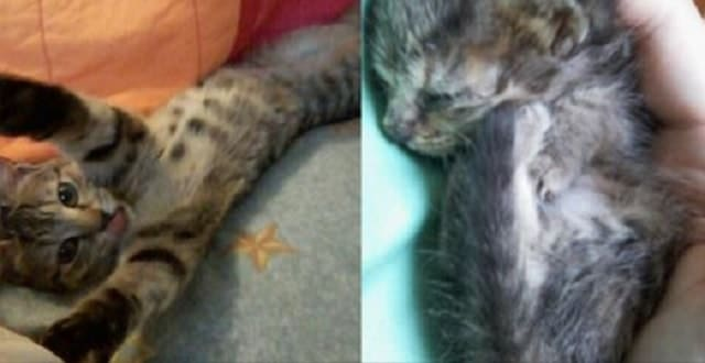 She Thought This Kitten Was Dead But Then – Kitty Took A Breath!