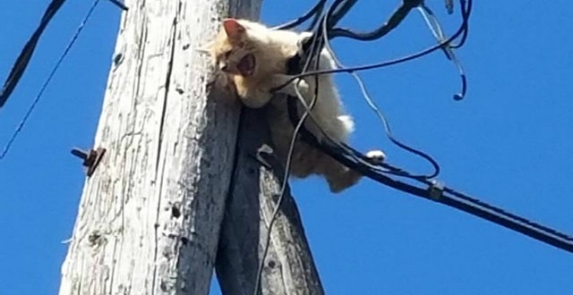 Cat Named George Rescued from Utility Pole!