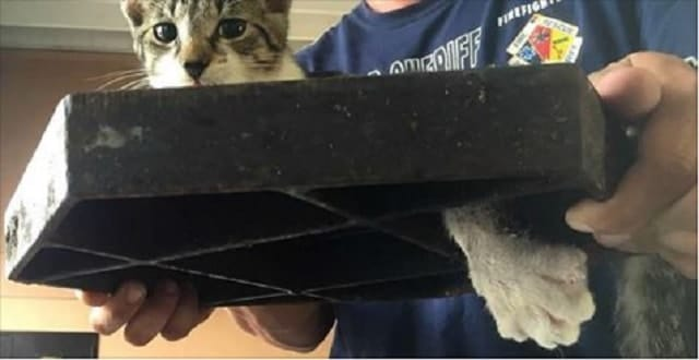 Fire Rescue Goes Above and Beyond to Save Cat Stuck in Sewer Cover! – VIDEO!