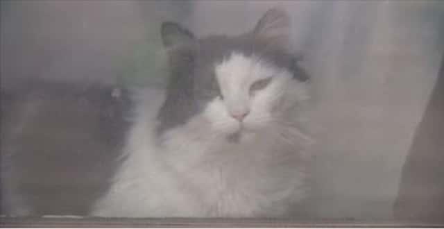 Neighbors Concerned After Cat Left Home Alone for Weeks! – VIDEO!