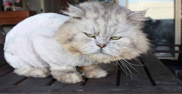 Family Reunited with Missing Cat 'Marbles' After Three Long Years!
