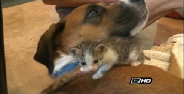 Rescue Dog Saves Six Kittens' Lives! – VIDEO!