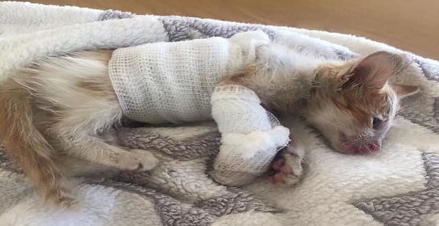 Disfigured Kitten Rescued From a Factory is Transformed by Love!
