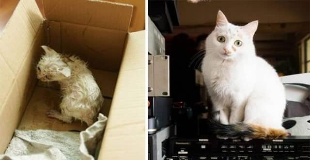 9 Cats Whose Lives Turned To Happiness After Adoption!