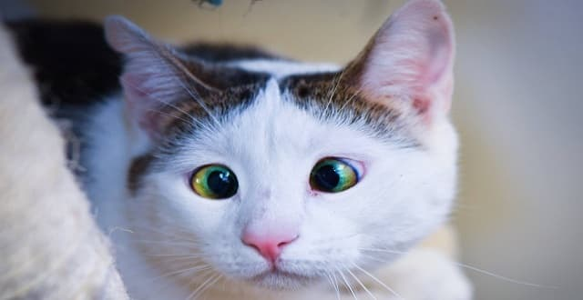 Cross-Eyed Kitty Lived In Total Fear, Until She Was Shown Love for the Very First Time!