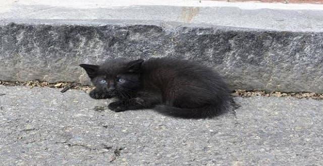 Crying Kitten Abandoned on Side of Massachusetts Road!