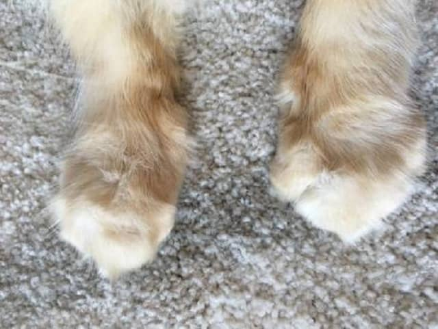 Paws without claws