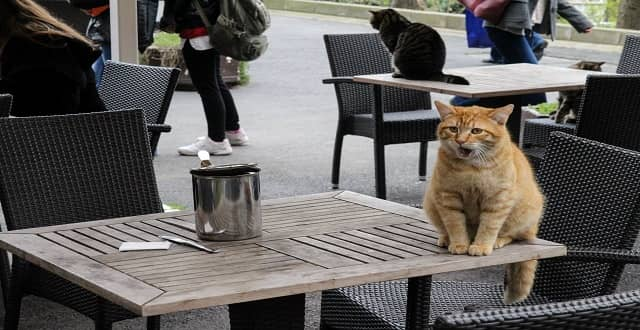 Istanbul Cat Documentary 'Kedi' Bought by Oscilloscope for U.S.