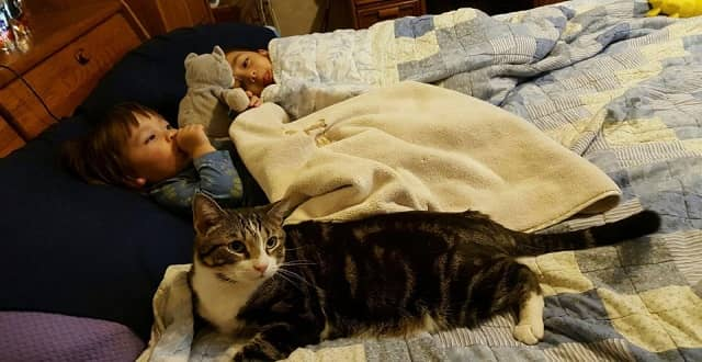 Rescue Cat Saves Baby's Life, Finds Forever Home!