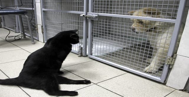 Paralyzed Black Cat Showers Sick Animals With Love At This Special Veterinary Clinic!