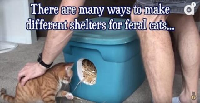 Keeping Your Feral Friends Warm This Winter!