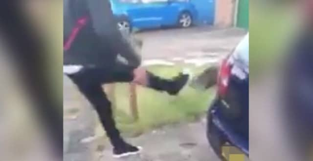 UPDATE – Teenage Cat Kicking Suspect Will NOT Be Charged!