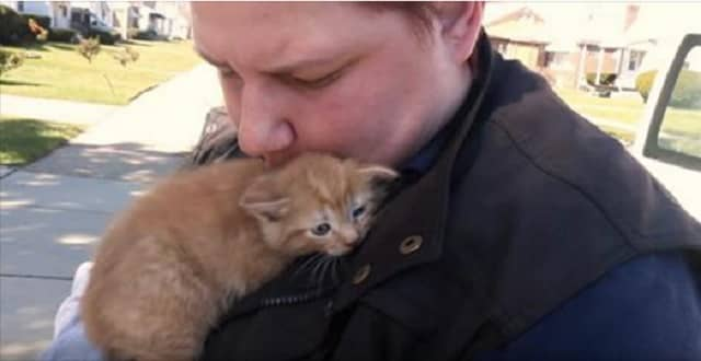 Cats Rescued After Being Thrown Out Of A Vehicle!