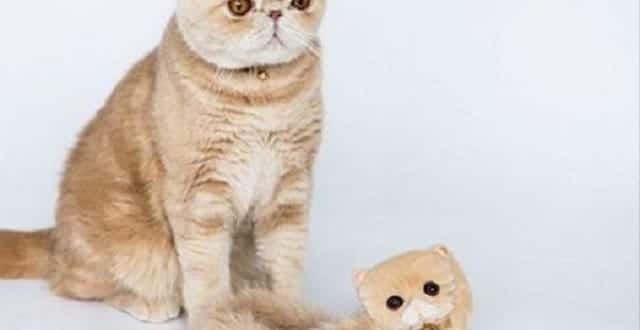 Instagram Celebrity Cat, Mash, Gets Own Line of Furry Fashion Shoes!