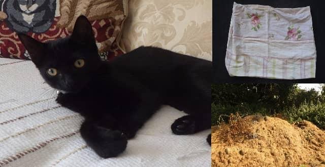 Black Kitten Left for Dead, Tied Up in Pillowcase!