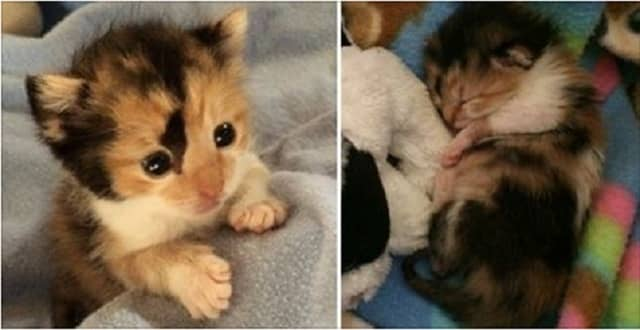 Kitten Found On The Street, She Still Had The Umbilical Cord – How She Was Saved!