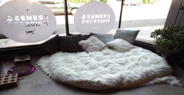 NOW OPEN! Meet The Cats Of Los Angeles' First Cat Cafe!