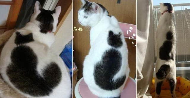 Wow! These Kitties Look Painted!