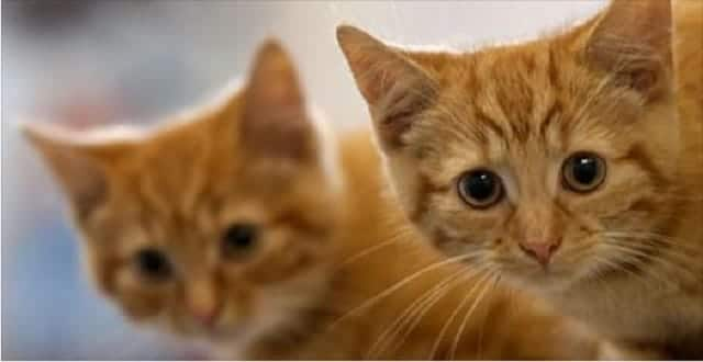 Family Reunited With Cat After Losing It On Cross-Country Trip!