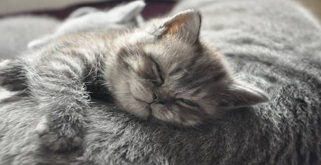 16+ Happy Cats On The Internet!
