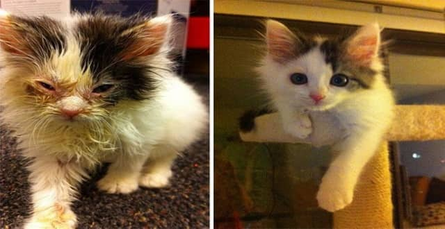 Here Are 12 Cats, Before and After Rescue Shots! You Won't Believe The Difference!