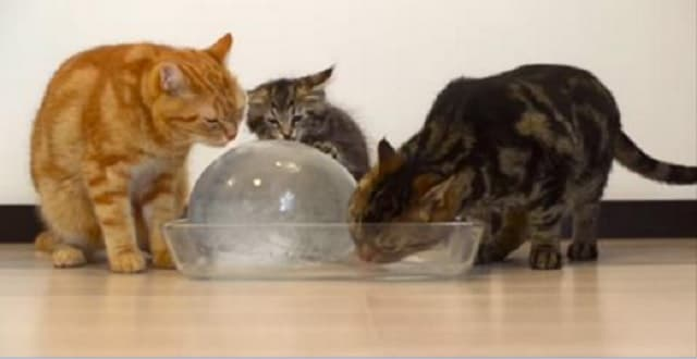 Giant Ice Ball Keeps Cats Busy For Way Longer Than You'd Expect!