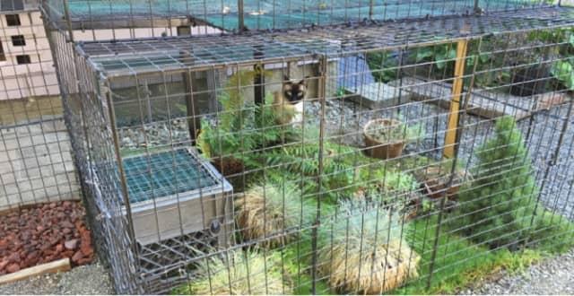 Catio Tour Promotes Safe Backyard Habitat For Cats and Birds!