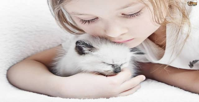 MU Researcher Hopes to Study Benefits of Cats for Children with Autism!