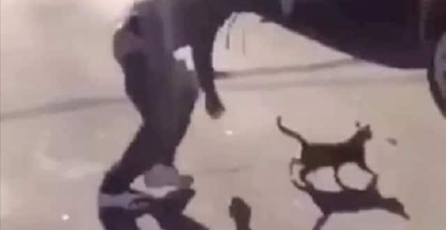Twisted Thug Filmed Himself Kicking Cat in England Street!