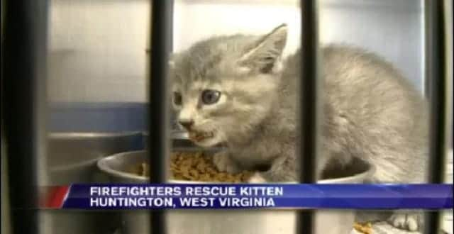 Watch Heroic Firefighters Rescue Frantically Meowing Kitten from Storm Drain!