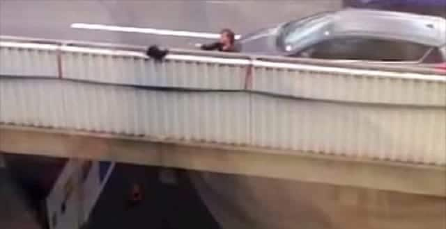 Cat Trapped On A Flyover Gets Rescued By Good Samaritans!