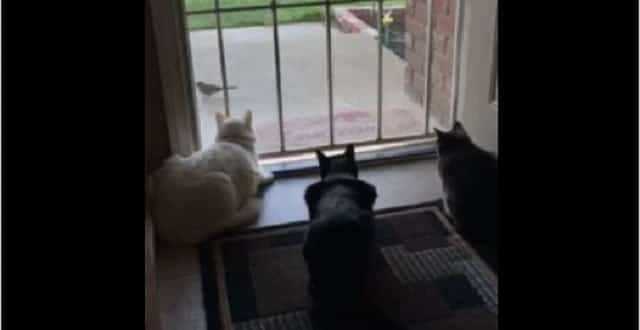 This Dog Ruins a Quiet Cat Moment, Leep Your Eyes on the Black Cat in the Middle!
