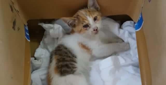 Man Saves Calico Kitten He Saw Fall From a Bridge!