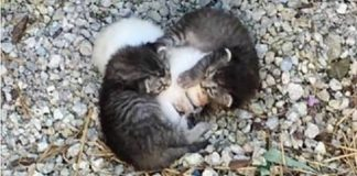 Kittens Were Found Trying To Protect Their Shivering Sister!
