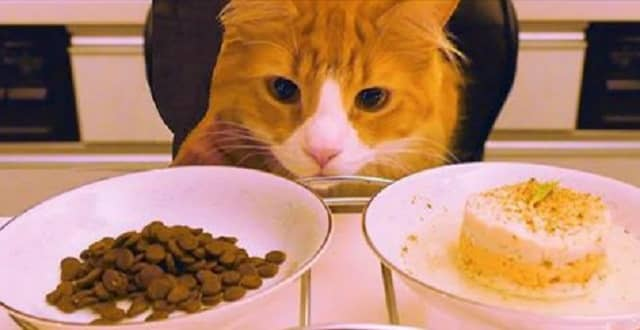 Guy Prepares His Cat a Fancy Gourmet Meal That's Better Than Your Dinner!