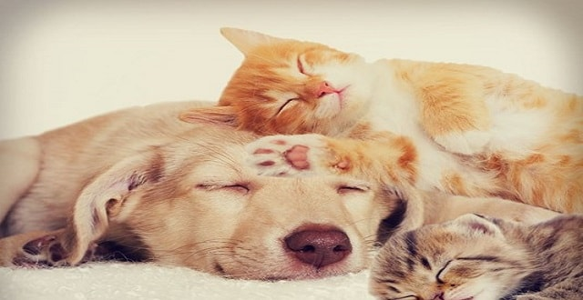 Cats vs. Dogs – Which Pet is More Affordable?