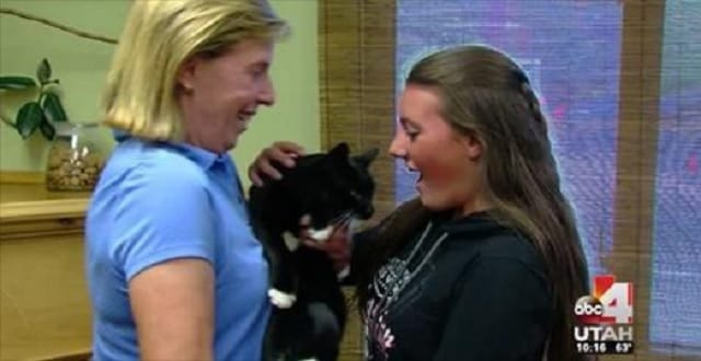 """""""Miracle"""" Cat, Lost and Feared Dead, Crosses Mountains to Find Family!"""