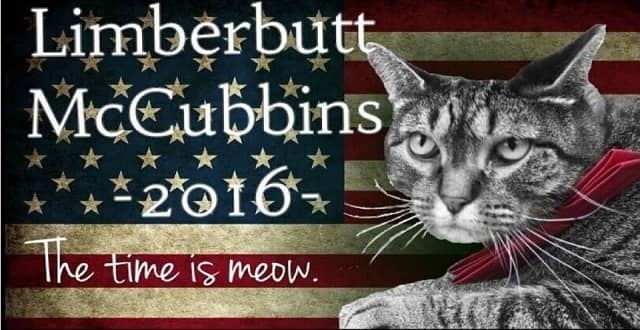 Don't Like Clinton or Trump? You Can Vote for a Cat Named Limberbutt McCubbins Instead!